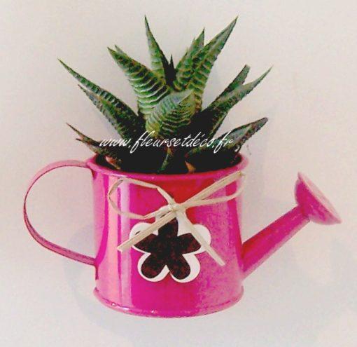magnet plante