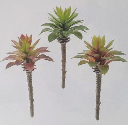 succulente artificielle