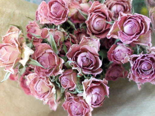 Roses séchées